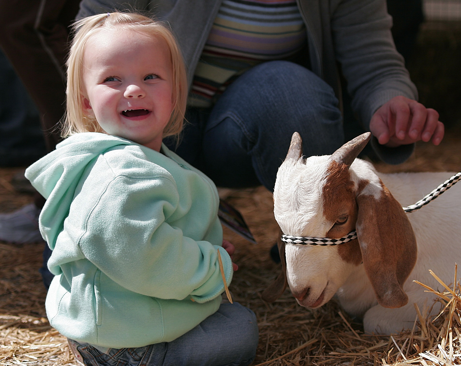 A petting zoo is an almost fool-proof photo opportunity - especially when little kids are involved. A town festival brought out the local FFA chapter, which provided a children's petting zoo featuring farm animals. This little girl's face registers excitement as she gets close to a resting goat.