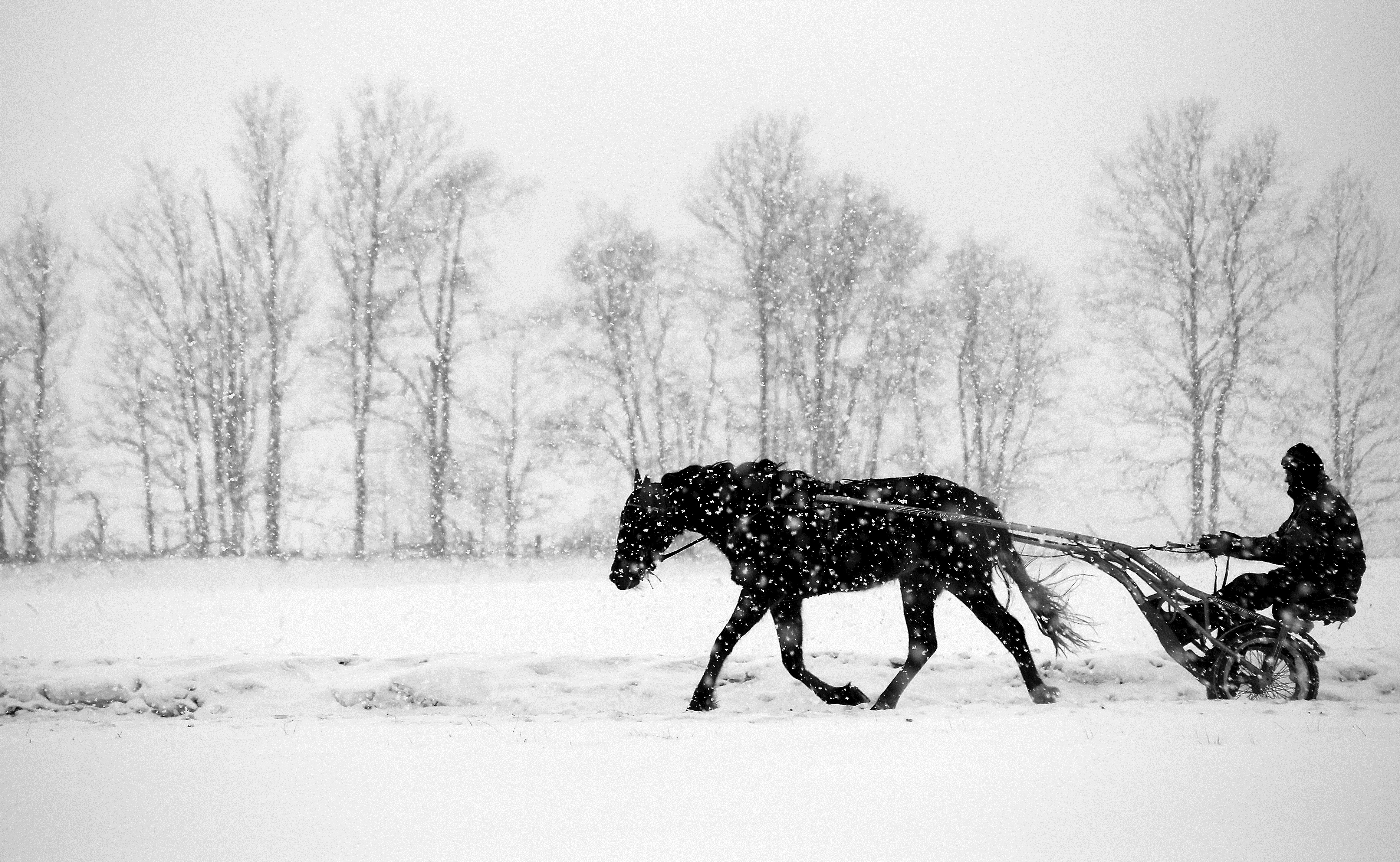 Wilfong horses plod through the weather.