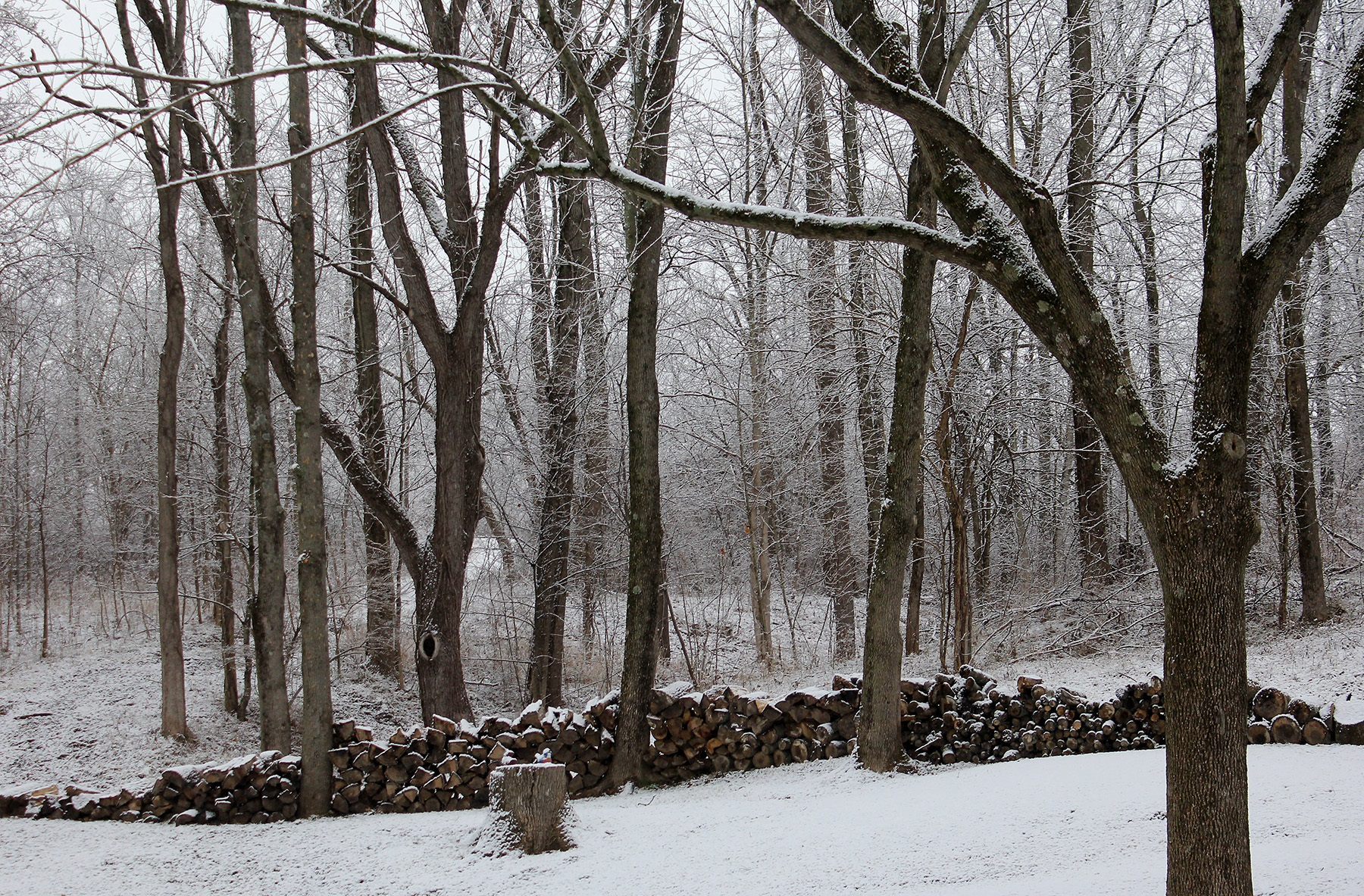 Wet snow blankets a wood near Kennard, Indiana.
